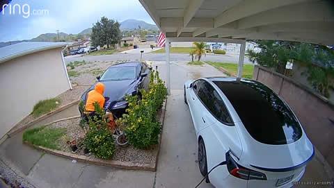 Delivery Runaway Lexus Rolls into Garden