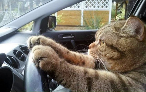 cat_driver
