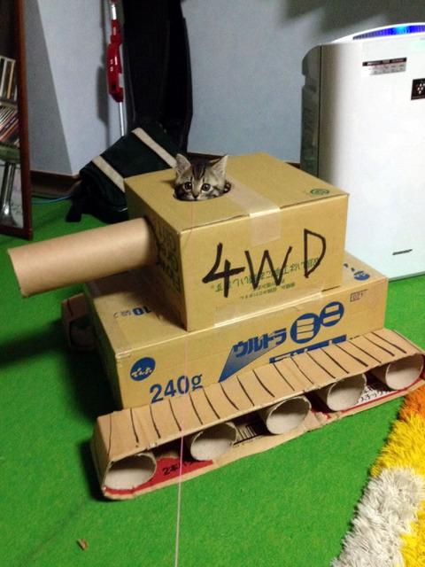 cat_tank