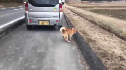 okayama_dogrun
