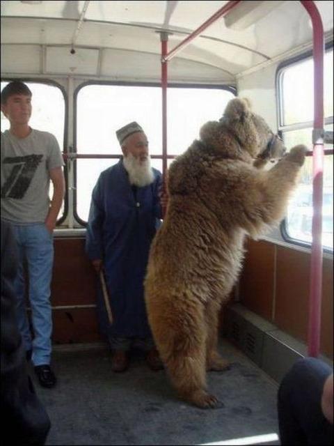 bus_in_bear