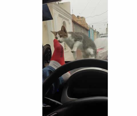 Man Scares Cat