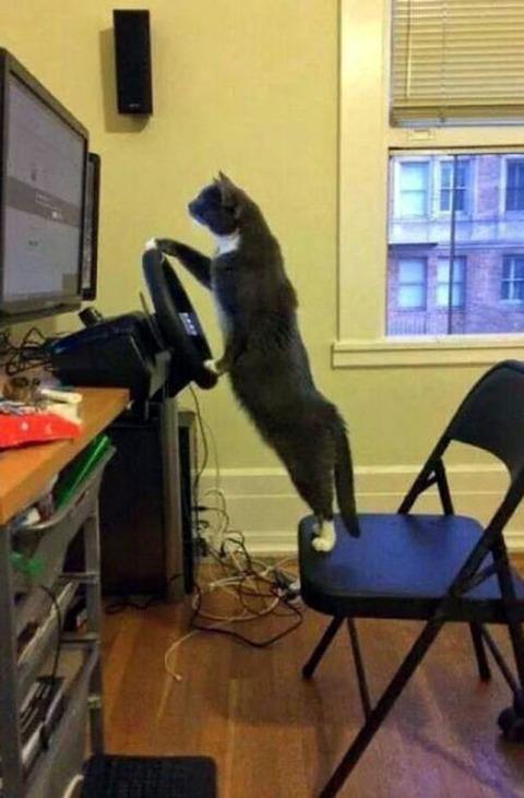 drive_game_cat