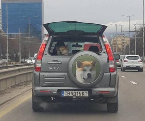 car_dog
