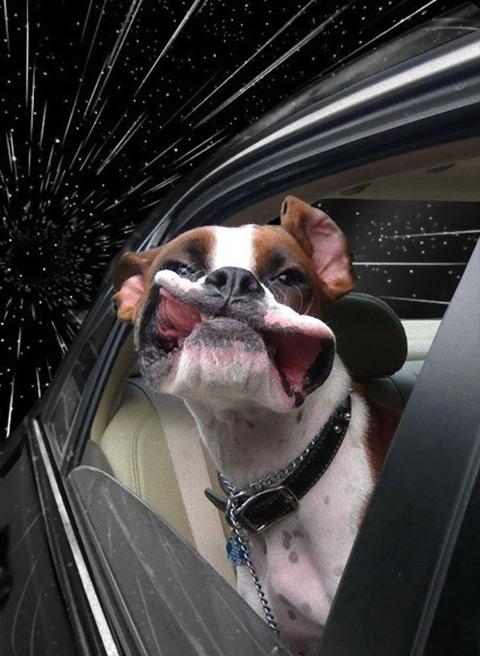 warp_dog