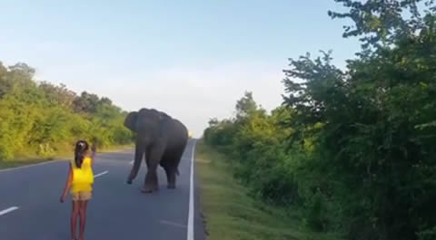 Little Girl Control Wild Elephant
