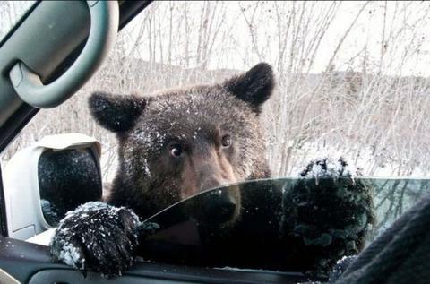 bear285