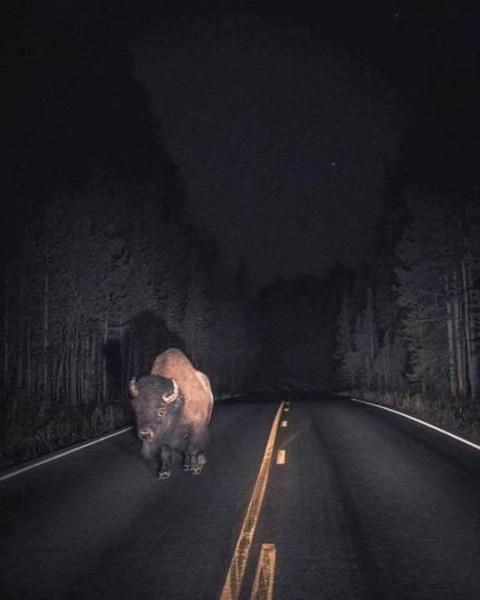 night_buffaro