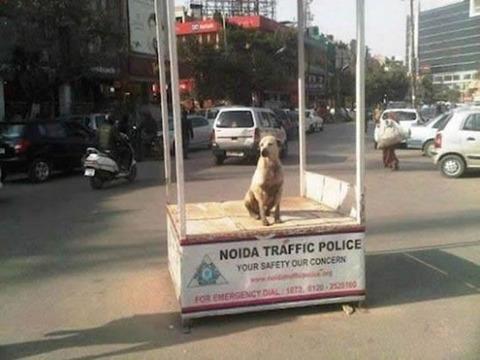 dog_trafficpolice