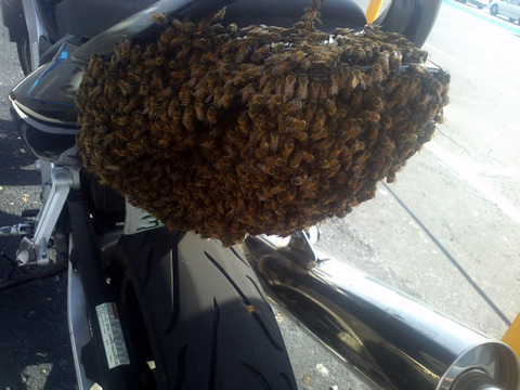 bike_bee