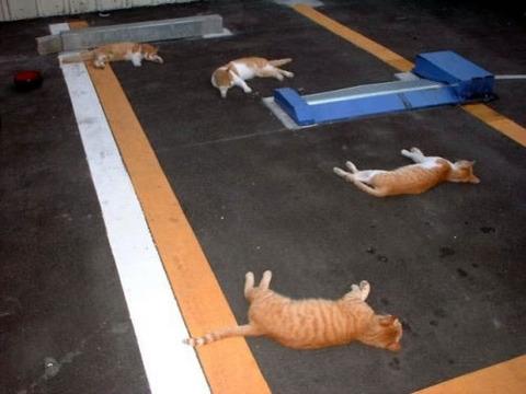 cat_parking