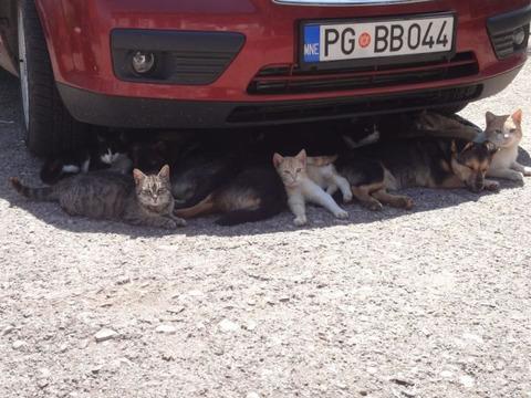 cat_dog_cooler