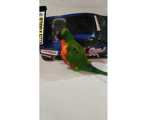 Bird Rides RC Car