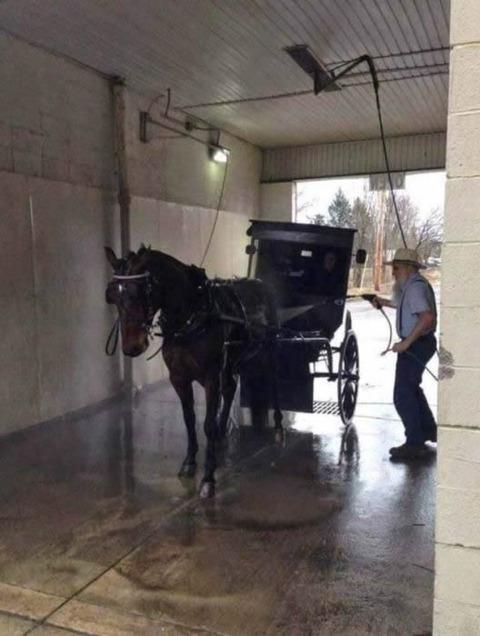 wash_horse