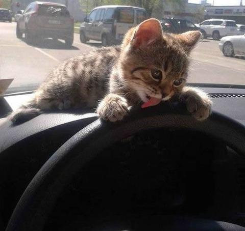 handle_cat