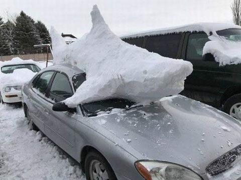 snow_shark