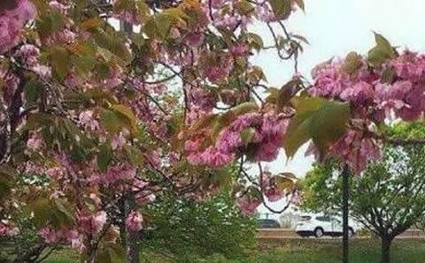 Flower blossoms_S