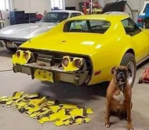 dog_crash