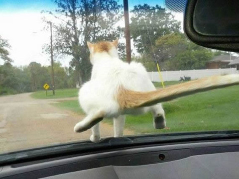 cat_navigation
