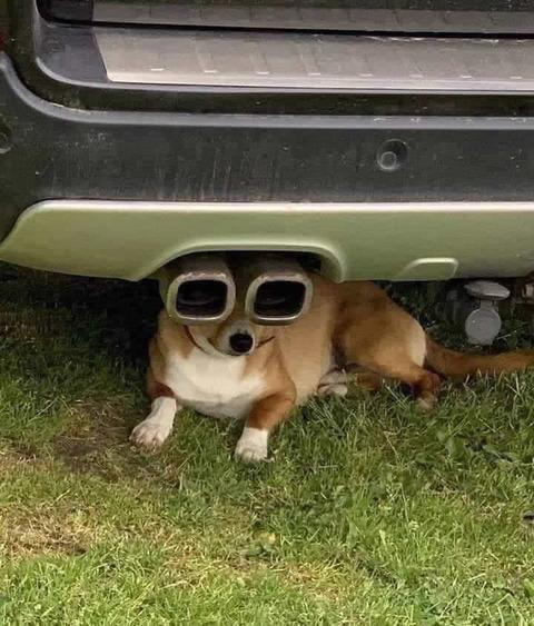 muffler_dog