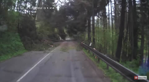 Trees Spontaneously Fall on Driver Causing Panic