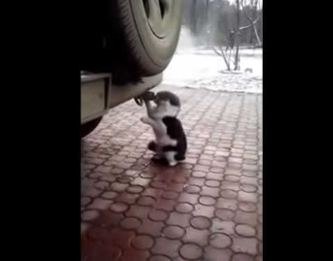 engine_gas_cat