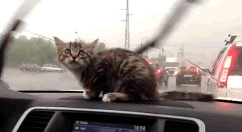 cat_wiper