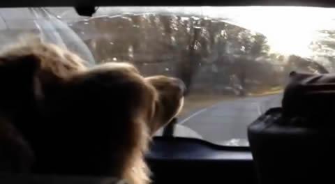wiper_dog