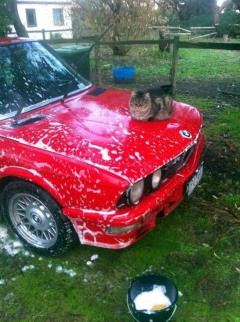 carwash_cat