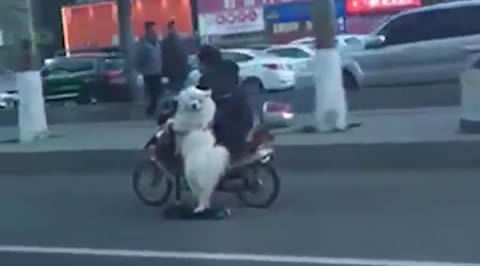 Dog rides scooter alongside owner on his motorcycle