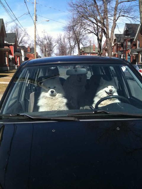 dog_drive