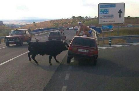 bull_attack