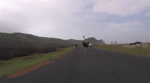 Ostrich vs bicycle