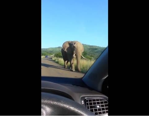 Elephant encounter results in crushed windscreen