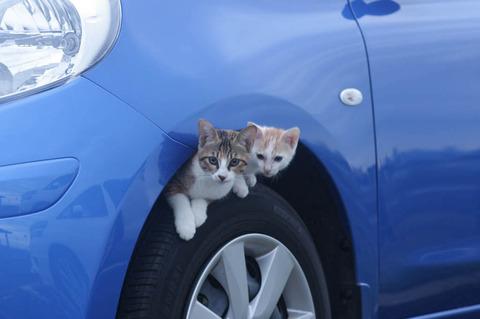 cat_tire