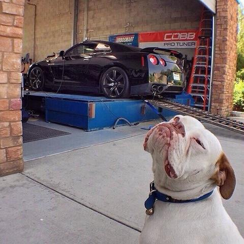 car_tuner_dog