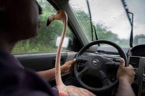 pet_drive