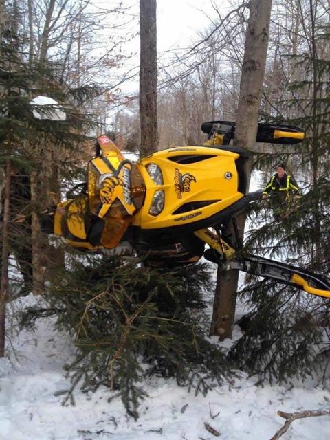 snowmobile_tree