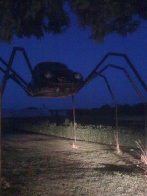 spider_beetle