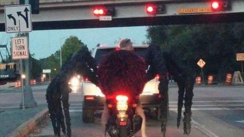 spider_rider