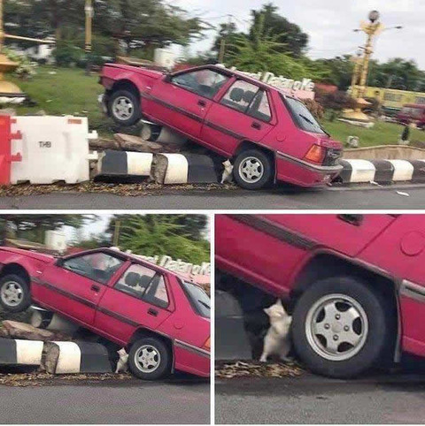 stack_car_cat