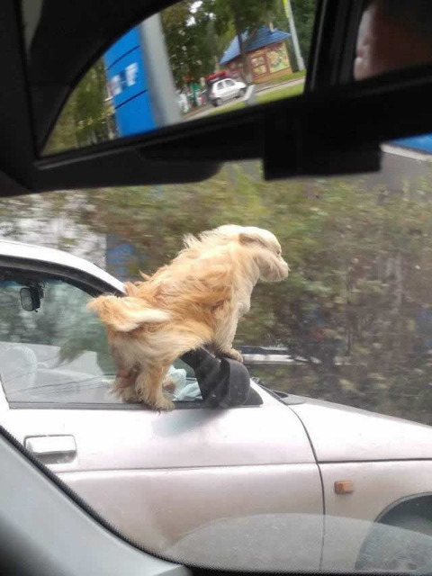 wind_dog