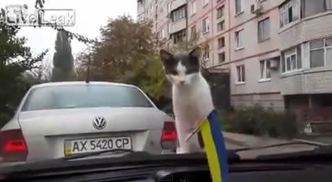 cat_wiper_jump