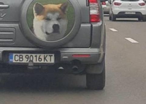 car_dog_s