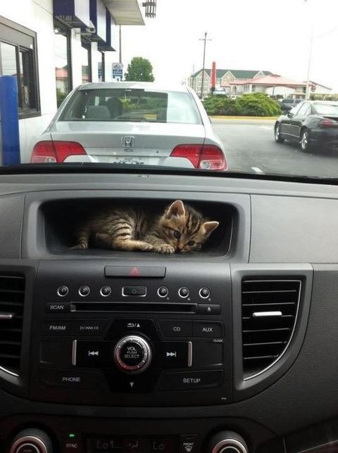 dashboard_cat