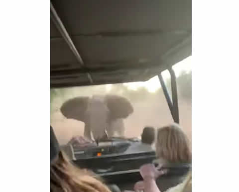 Angry Kruger Park Elephant Attacks Car full of Tourists