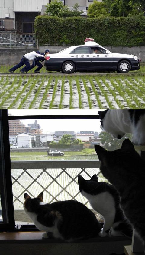 miyagi_police_catseye