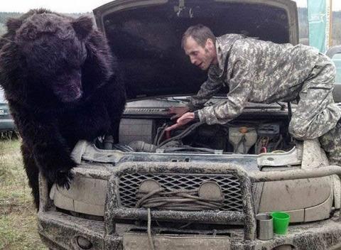 bear_mechanic