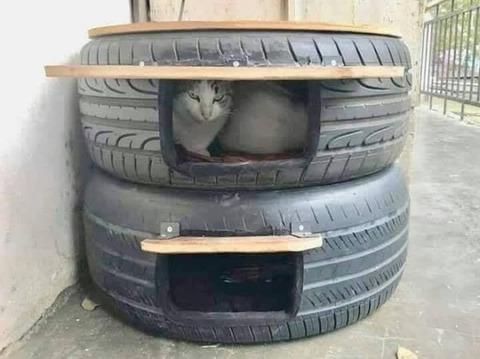 tire_cat