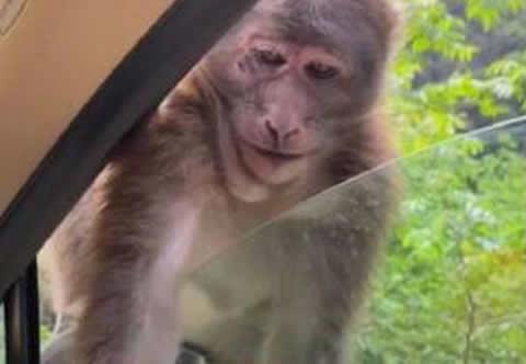 smile_monkey_s